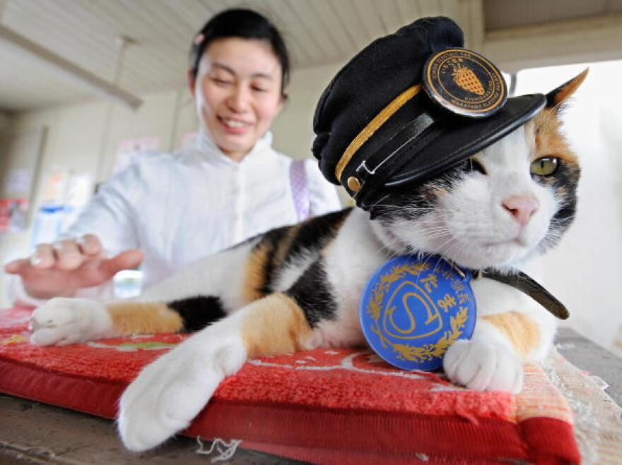 Tama had held sway as stationmaster of the Kishi train station since 2007.