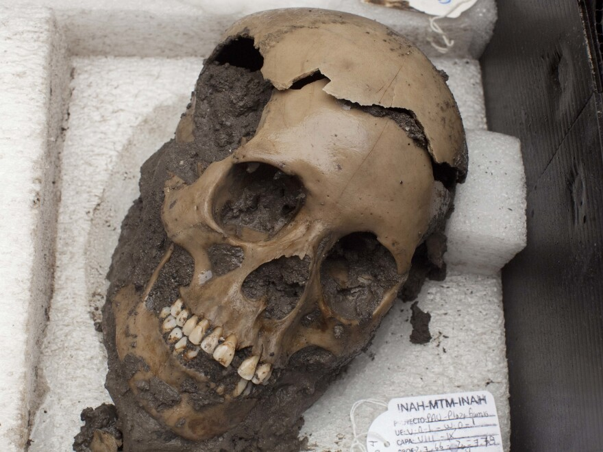 A skull discovered at a sacred Aztec temple. A new study analyzed DNA extracted from the teeth of people who died in a 16th century epidemic that destroyed the Aztec empire, and found a type of salmonella may have caused the epidemic.