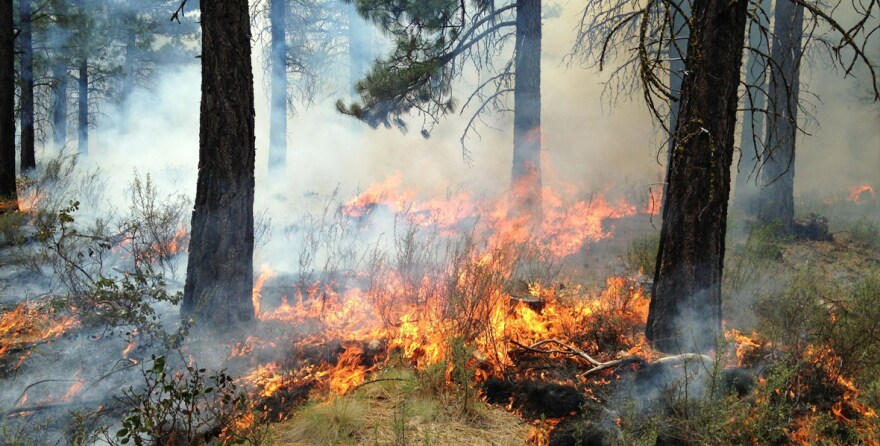 feature_-low-intensity-fire_credit_nature_conservancy_0.jpg