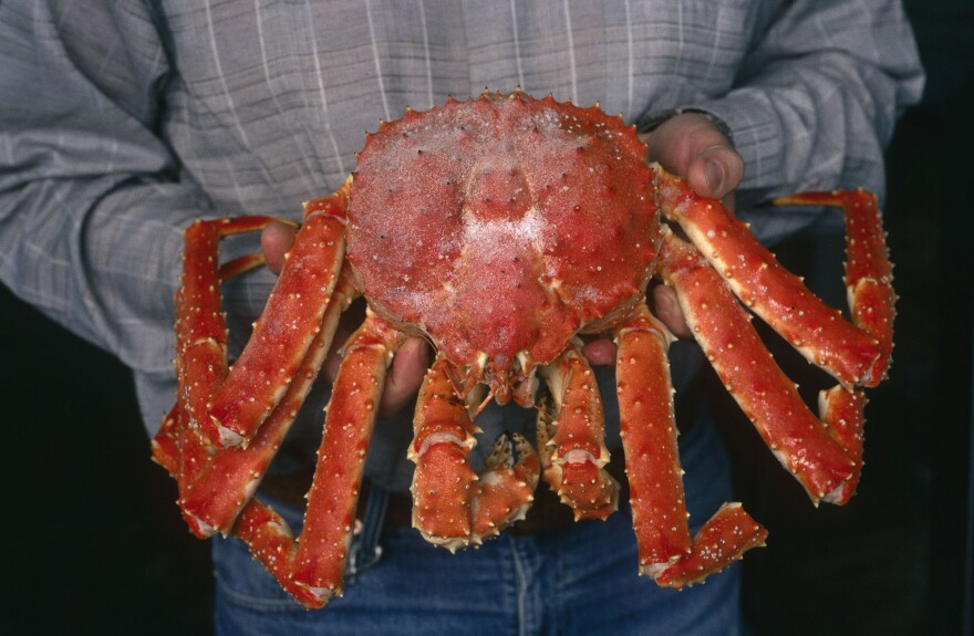 Kamchatka crab (Paralithodes camtschatica), a highly priced delicacy, are very often caught and sold illegally.
