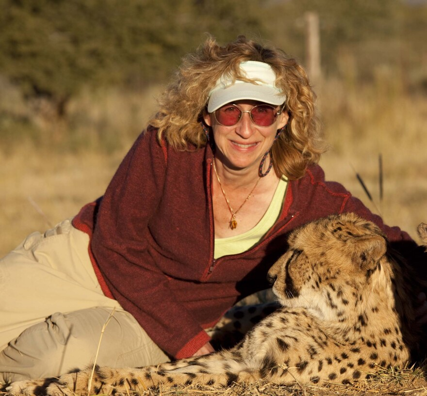 Sy Montgomery with a cheetah in Namibia.