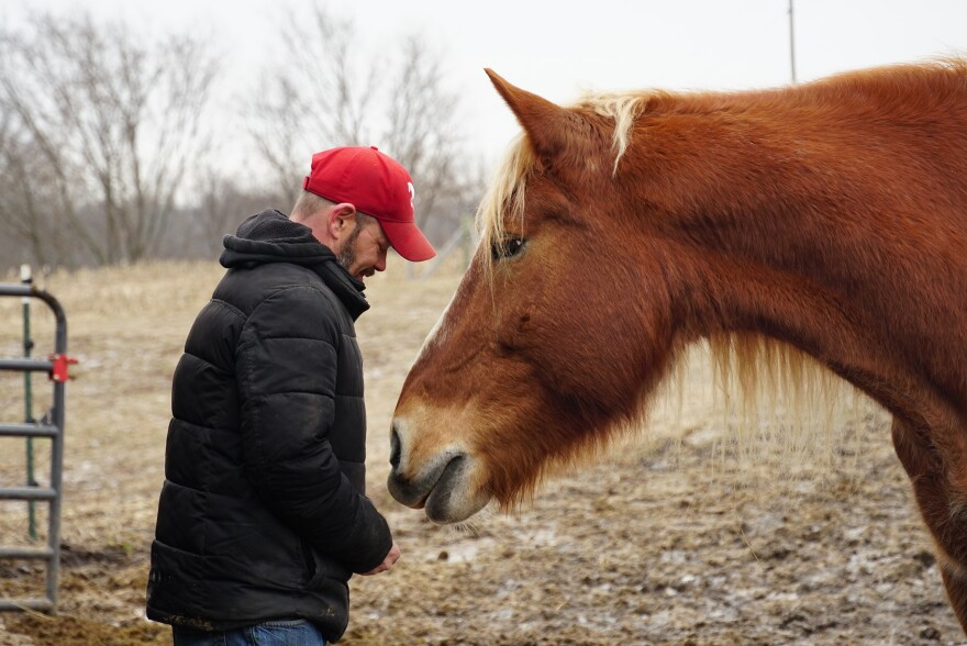 Shannon Nickless, owner of Claddagh Carriage Company, slips a peppermint to his draft horse, Harvey on January 28, 2020. The four horses live on a farm in East Carondelet, Illinois and travel back and forth to the city of St. Louis to pull carriages.
