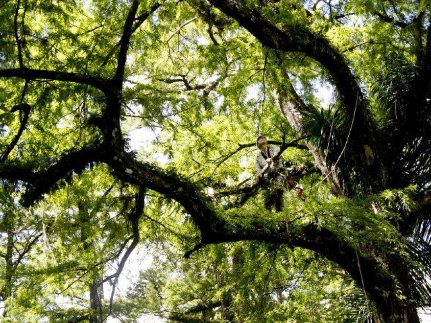 6-19-14_trees_M.jpg