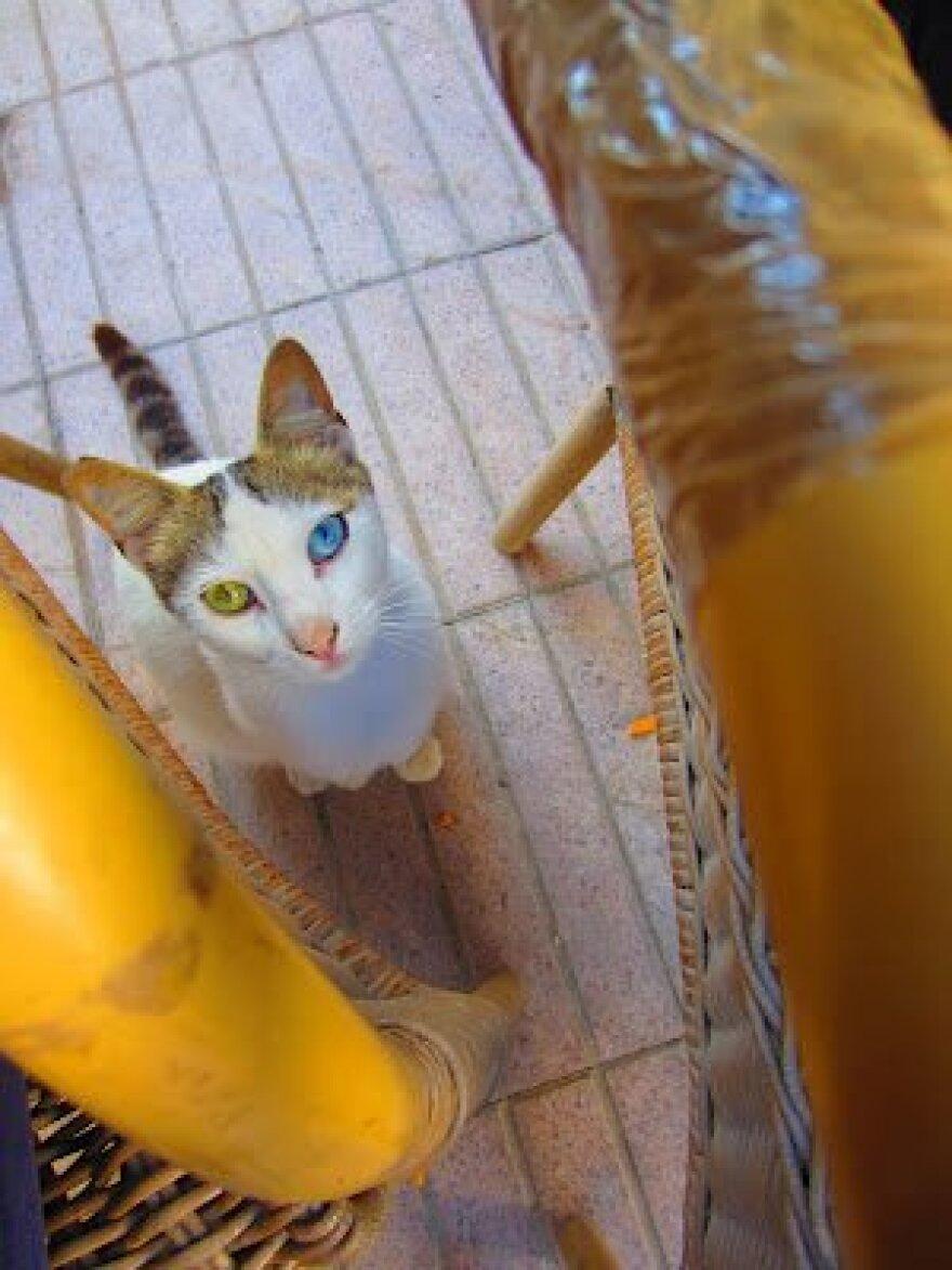 Kitty cat_0.jpg