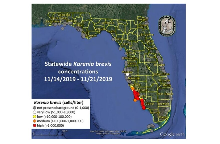 The Google earth map has colored dots to show red tide levels along Florida's west coast.