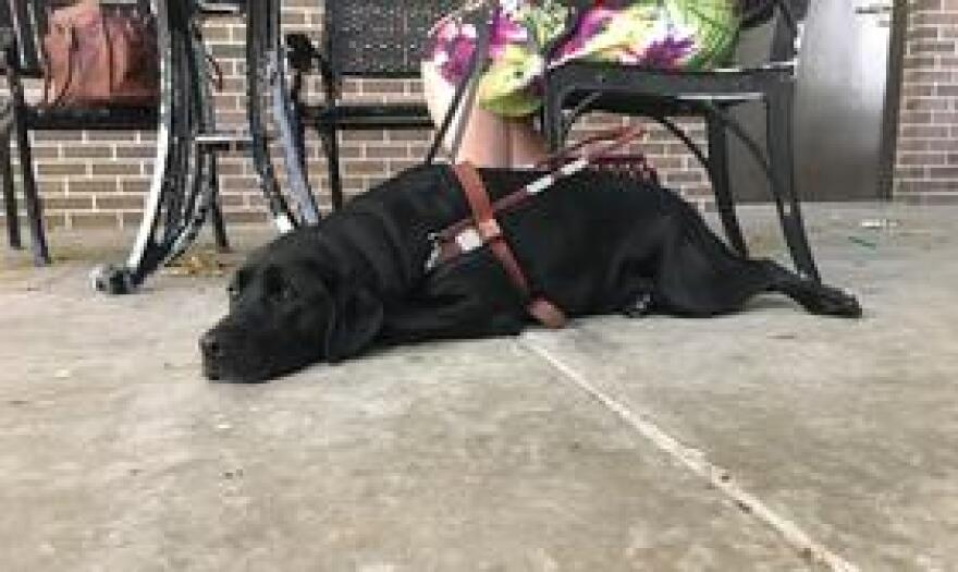 York might look like he's napping but his owner Emily Michael said he's still alert and working.