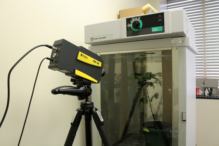 To record the treehoppers' vibrations, Fowler-Finn uses an instrument called a laser Doppler vibrometer. The tiny treehopper is somewhere on the plant inside the incubator.