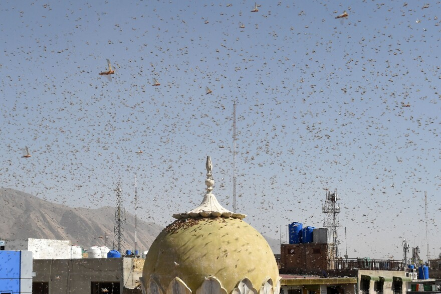 Locusts swarm in a residential area of the Pakistani city of Quetta. The country is suffering its worst locust plague in 25 years.