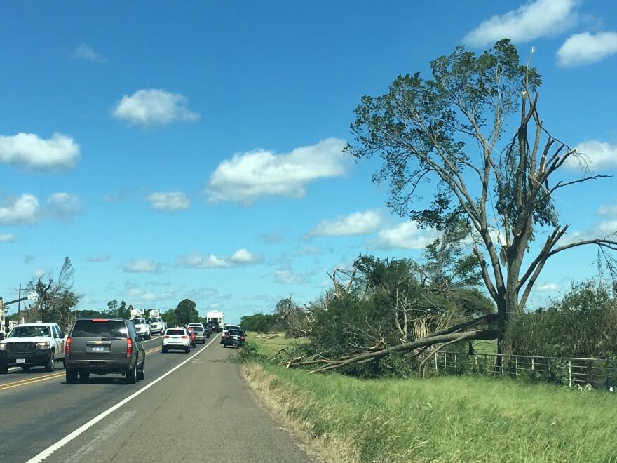 A tree split in half from the storms in Van Zandt County.
