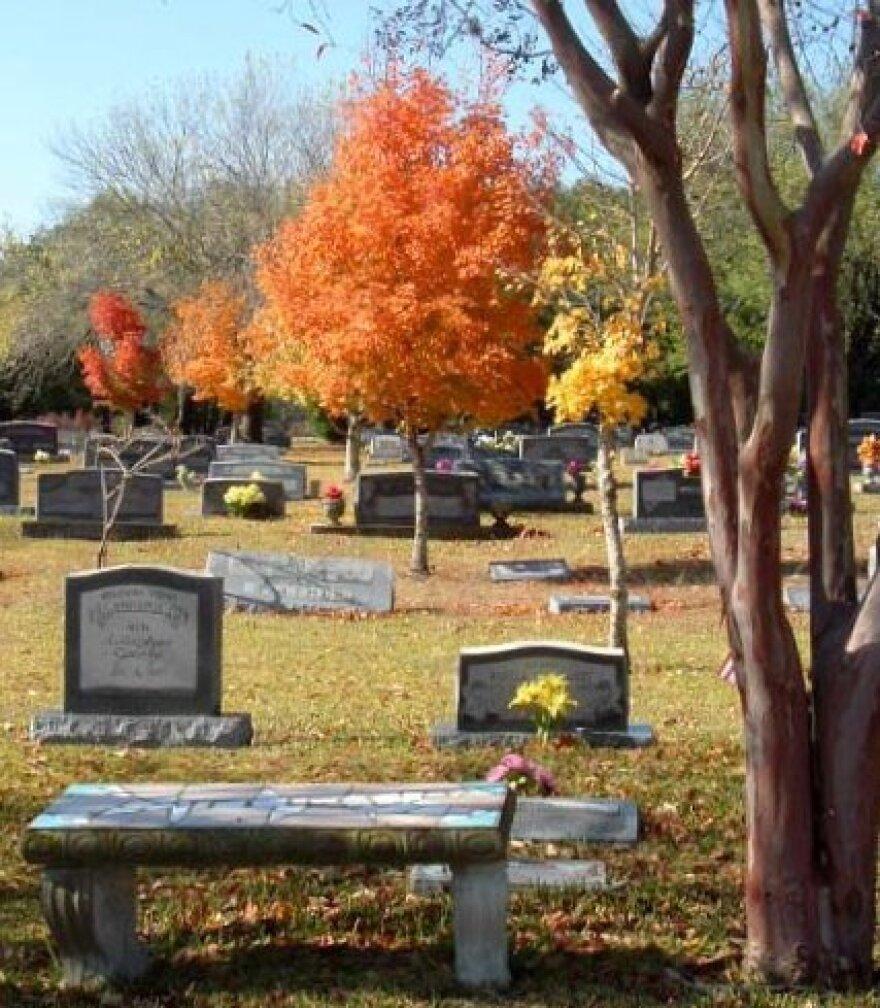 bigtooths_at_boerne_cemetery.jpg