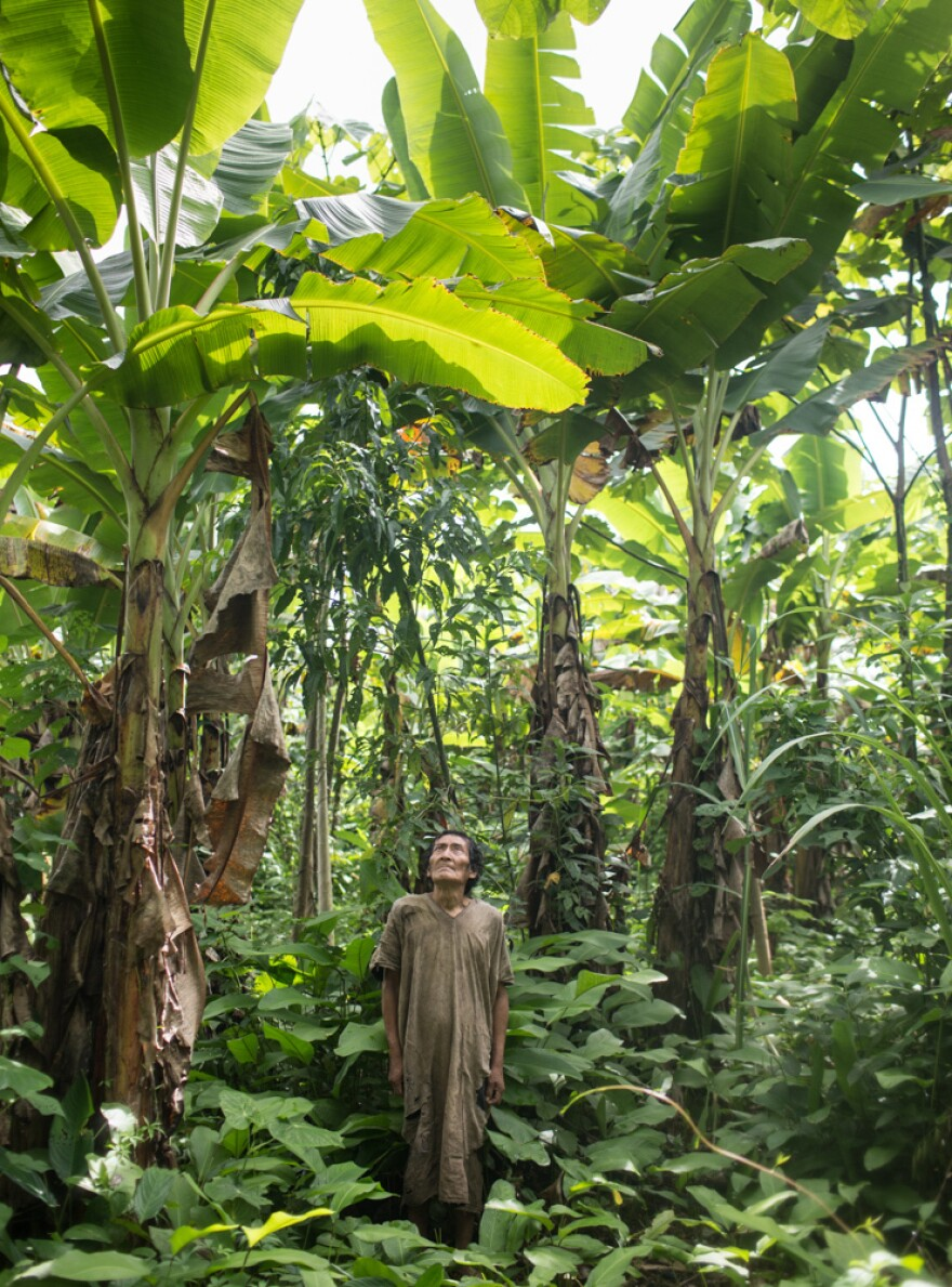 Jose, a member of the Tsimane group who's 75 years old, stands in the plantain field he planted in Bolivia's Amazon rain forest.