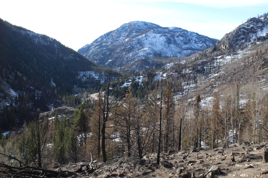 The Cameron Peak Fire burned through the headwaters for northern Colorado's Poudre River and many of its small tributaries.