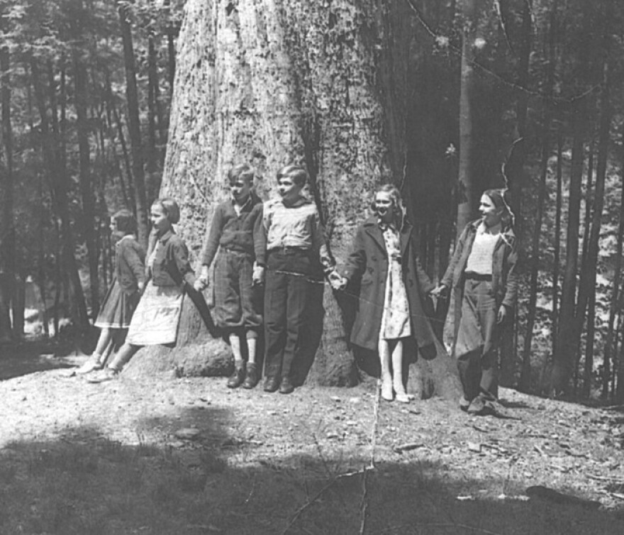 The Mingo Oak was reported to be the largest white oak in the world.