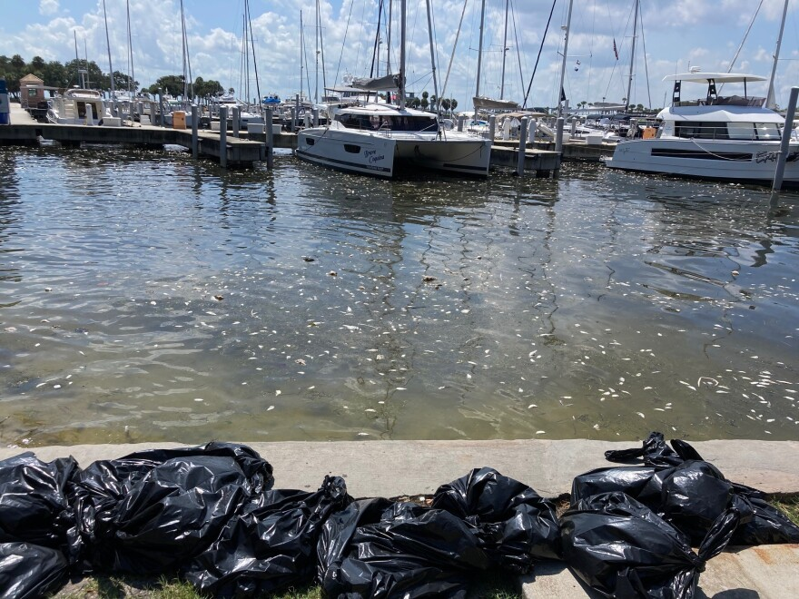 Trash bags full of dead fish along the St. Petersburg downtown waterfron