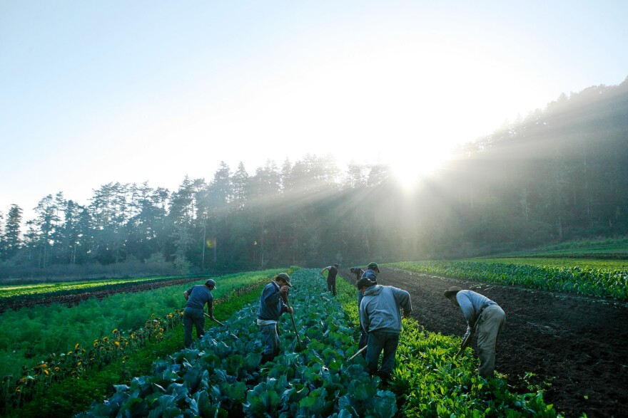 Many large-scale farms rely heavily on immigrant labor. And many farmers are opposed to Donald Trump's strong stance against illegal immigrant.