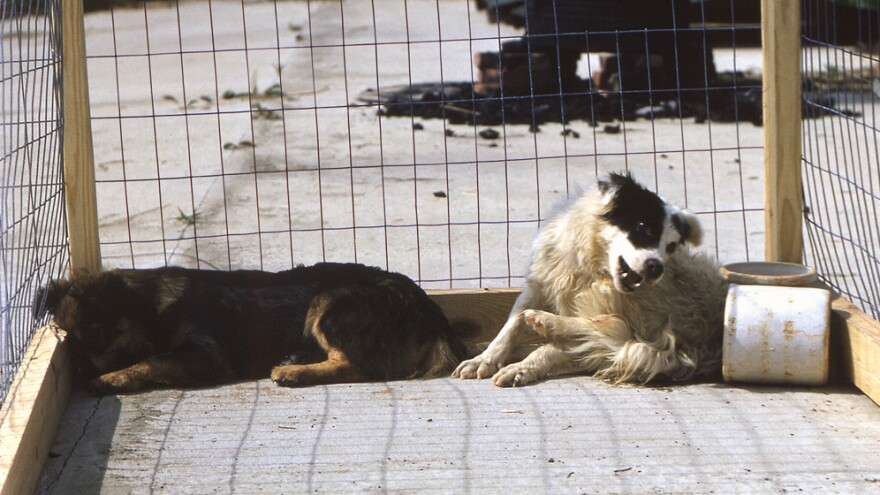 Around the world, bites from dogs infected with rabies are the most common way for humans to become infected.