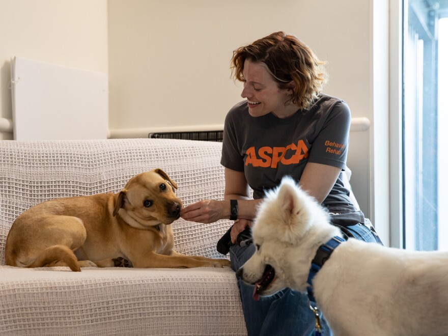 Kristen Collins, director of operations for the ASPCA's Behavioral Research Center, is a former copywriter who started investigating animal cruelty in the field for the organization 13 years ago.