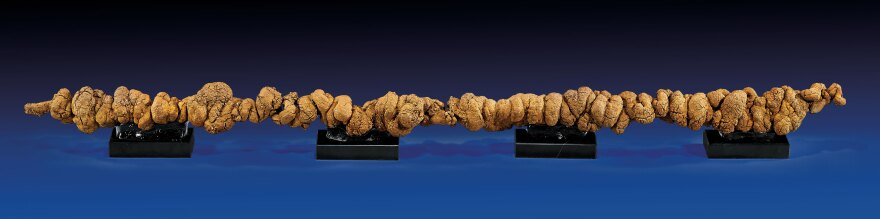 Forty inch long rare coprolite from the Miocene era.