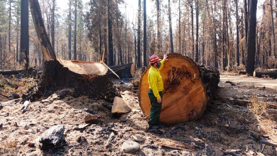 Logging - Burns - OPB.jpg