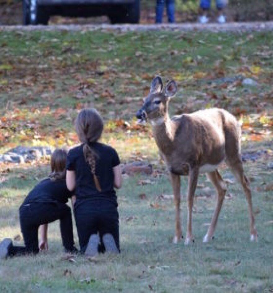 Deer-kids-280x300.jpg
