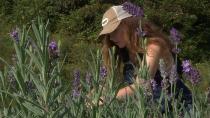 beth_clipping_lavender001_0.jpg