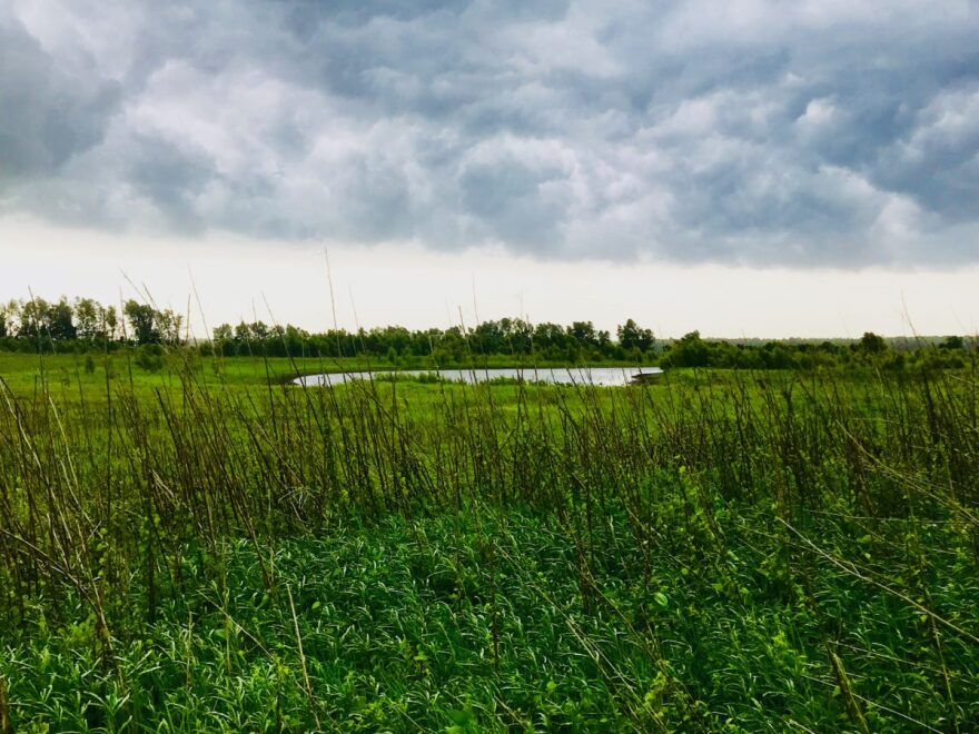 Land on Judy Wilson's farm in the wetlands restoration program.