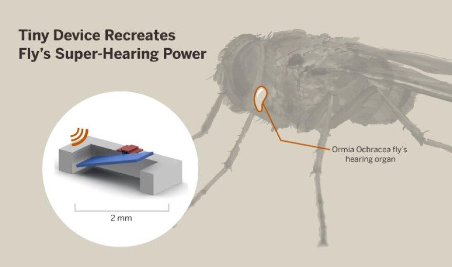 fly-hearing-device[5].jpg