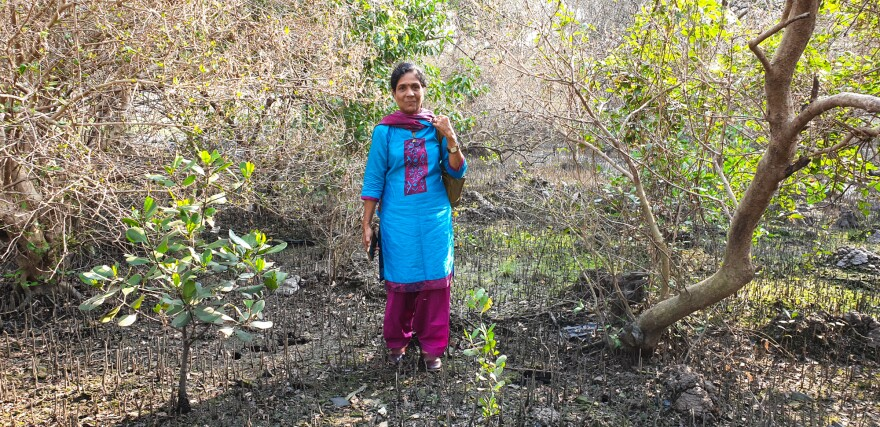 Seema Adgaonkar, 57, helped set up this mangrove nursery when she worked as a forest ranger with the state mangrove conservation unit.