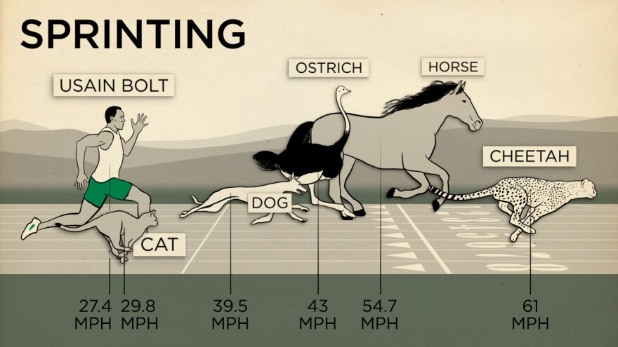 Humans aren't very good at sprinting.