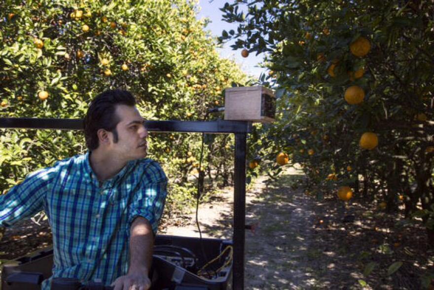 Citrus greening sensor.