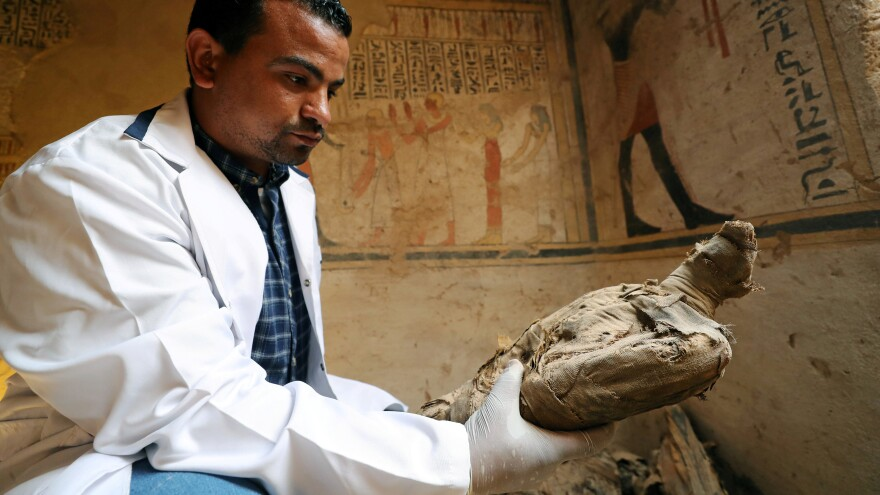 An archeologist holds an ancient mummified bird that was found in a burial site unveiled on Friday.