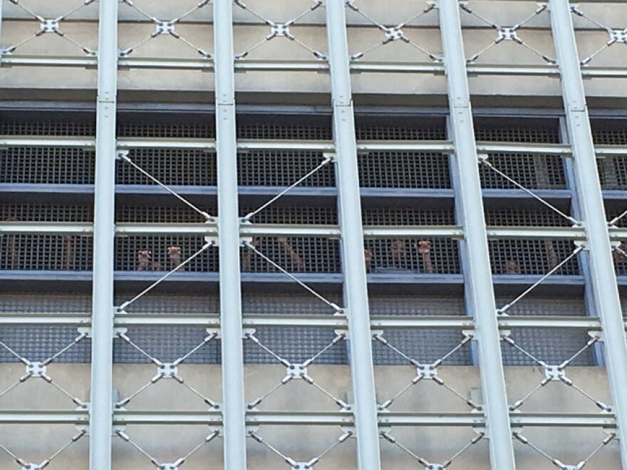 Inmates raise their fists from inside the Brooklyn jail, where they went without heat and electricity for a week.