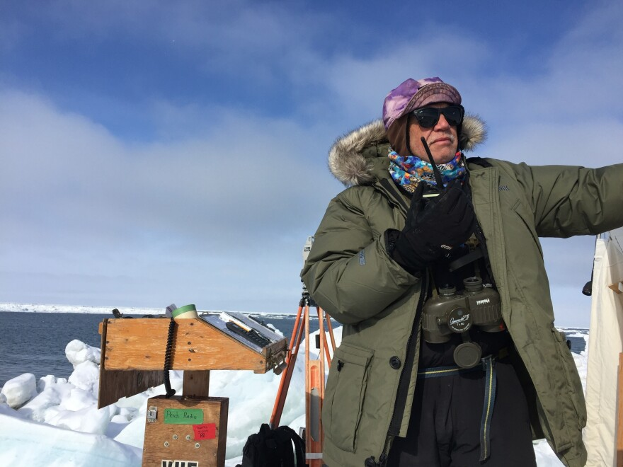 North Slope Borough wildlife biologist Craig George says until this year bowhead migration has been pretty steady despite changes in the environment.