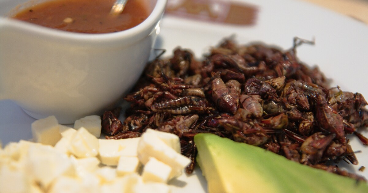 Entomophagy: The Case For Eating Insects