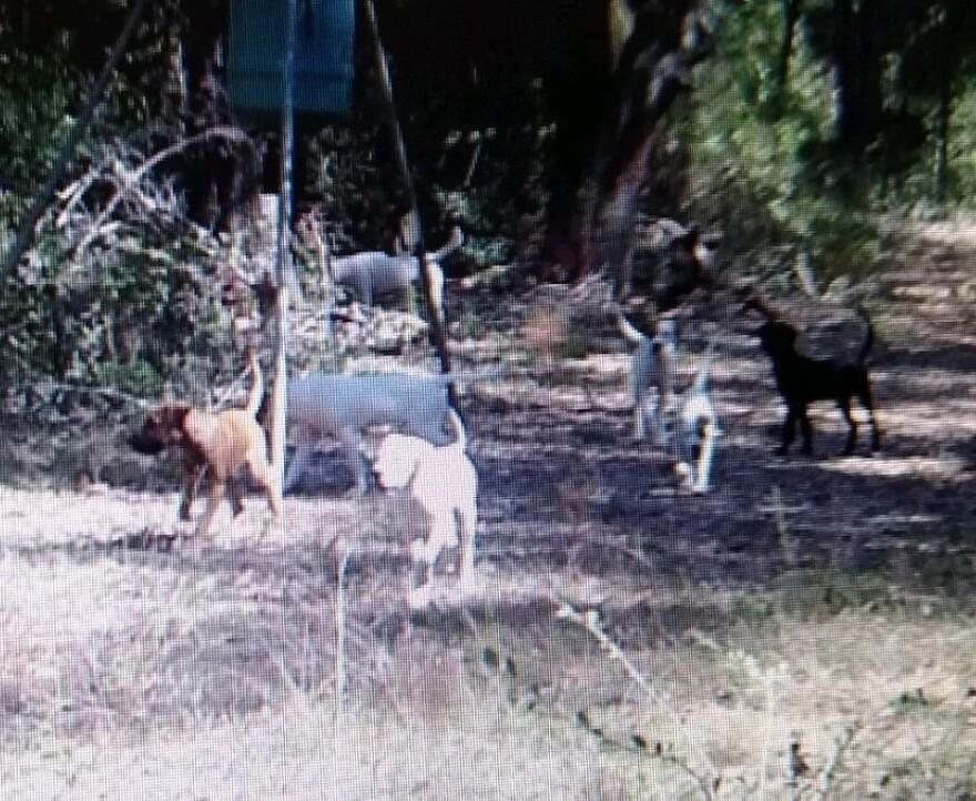 Dogs Seen On Kirkland Road 2.jpg