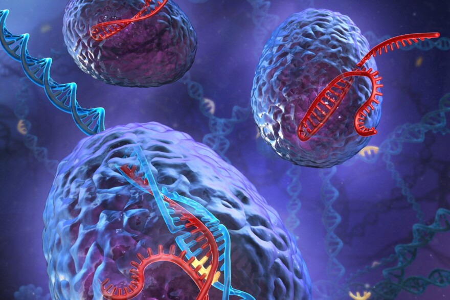 An artist's rendering of the powerful genome editing tool, CRISPR-Cas9. (Courtesy Stephen Dixon)