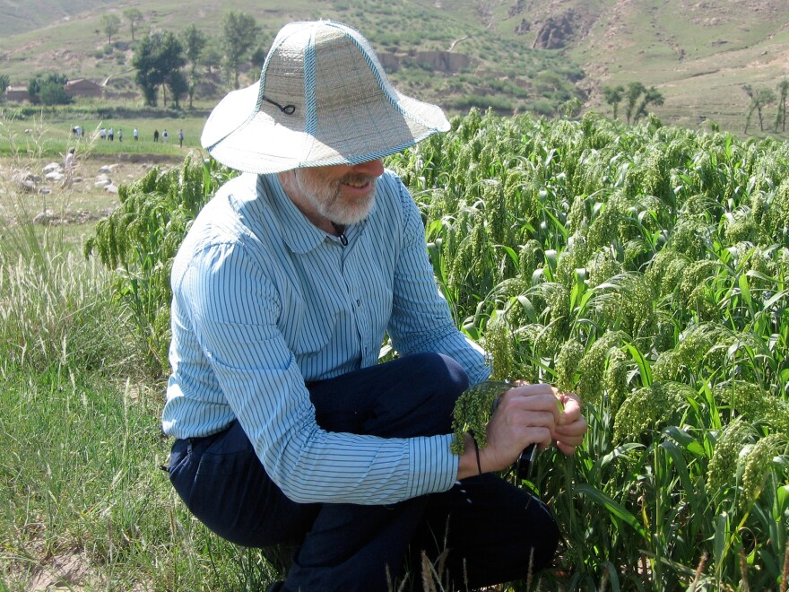 Martin Jones with millet in northern China. He led a team whose research pieced together a sweeping chronology and map of the grain's relationship with people.
