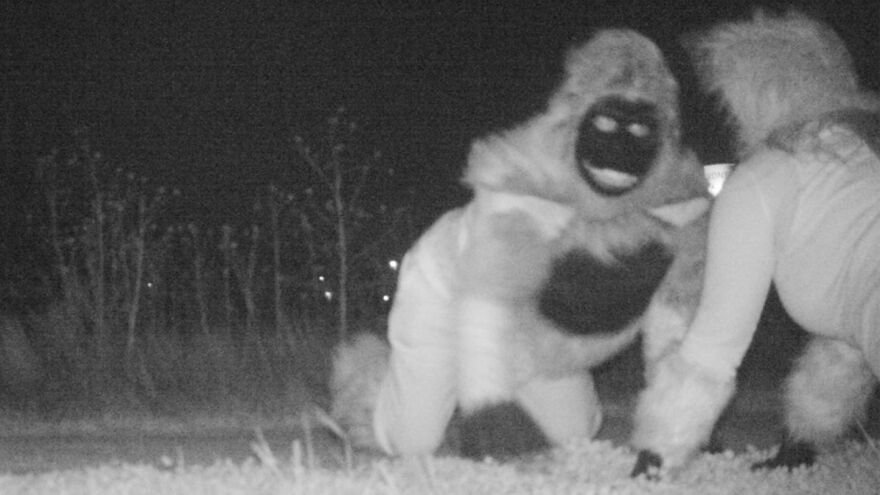 Trail cameras in Gardner, Kan., captured wild scenes from a local park — just not the type of scenes police were expecting to see.