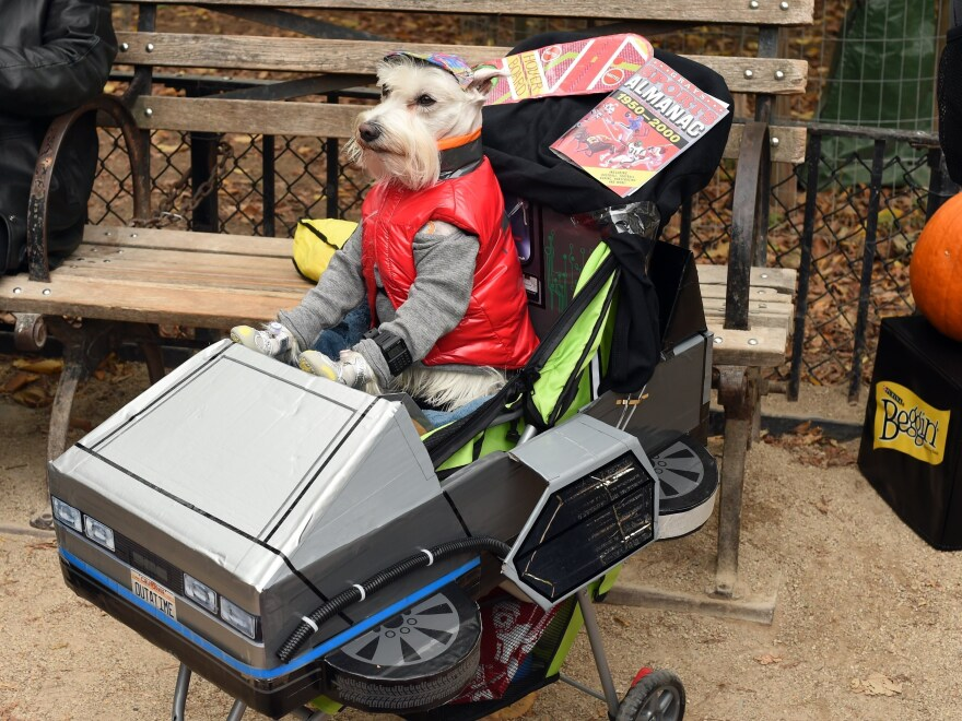 A dog dressed as Marty McFly from <em>Back to the Future</em> attends the 25th Annual Tompkins Square Halloween Dog Parade in 2015. New research says time travel might be possible without the problems McFly encountered.