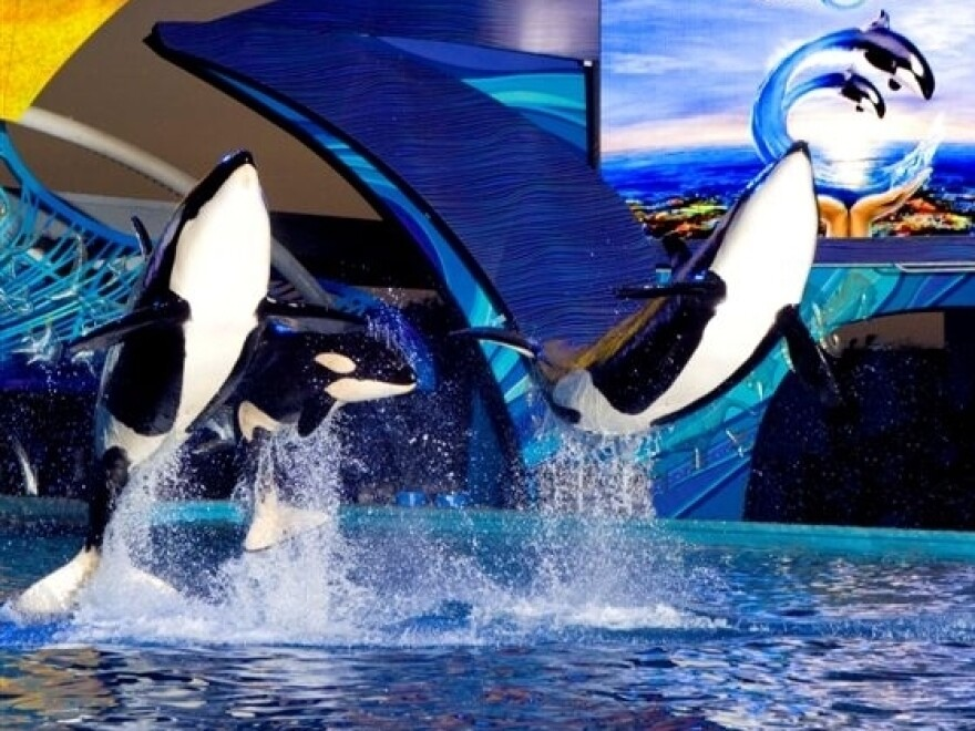 At Sea World in San Antonio, water that splashes out from Shamu's 5-million-gallon tank is captured then prepared for reuse through an on-site filtration system.