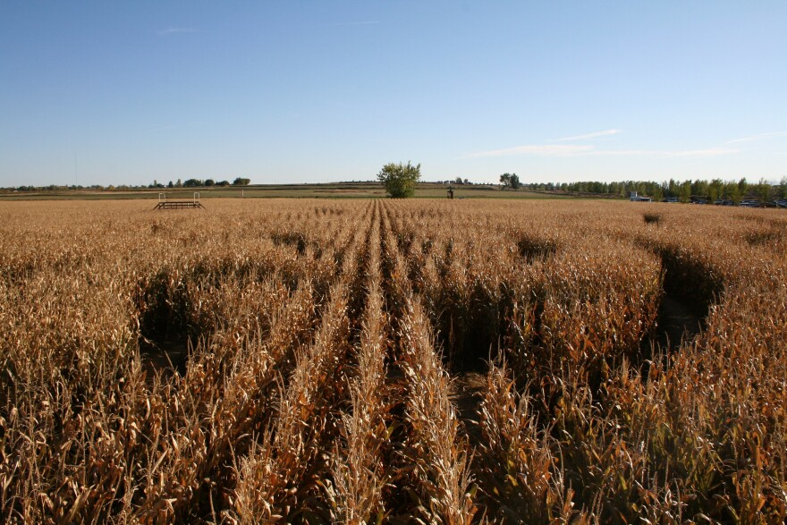 corn_maze_20121007.jpg