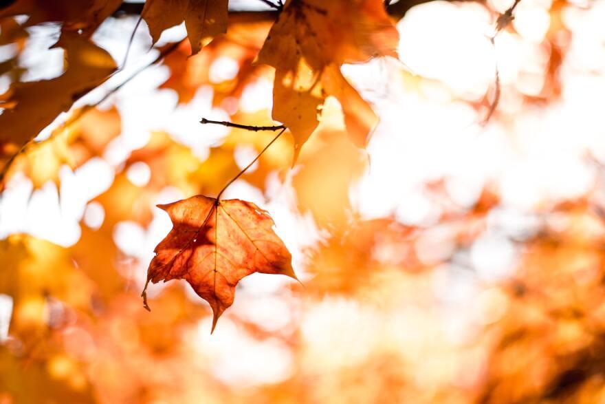 10-09-20-TOI-foliage