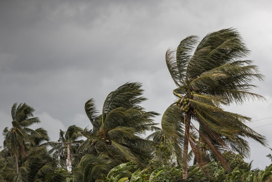 Beginning of tornado or hurricane winding and blowing coconut palms tree with dark storm clouds.