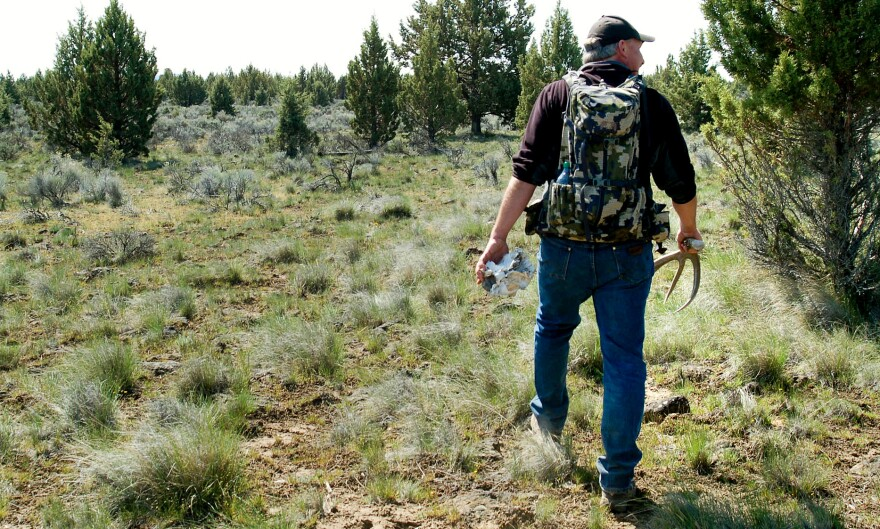 Troy Capps found deer antlers in central Oregon's backcountry. Capps is a co-founder of Oregon Shed Hunters, a group that promotes ethical shed hunting.
