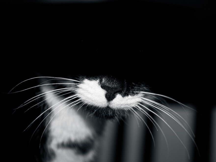 A photo of an unknown cat.