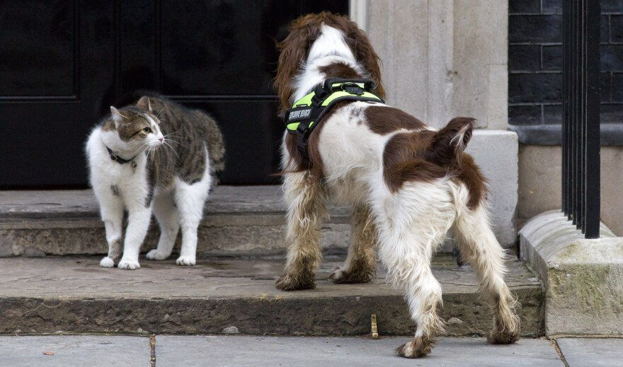 British Prime Minister David Cameron's cat, Larry, comes face to face with a police dog called Bailey as it does a security check outside No. 10 Downing St.