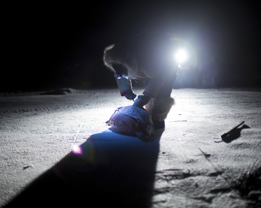 In the complete darkness of a January afternoon, Inuit elder Peugatuk Ettuk skins a seal by the light of his snowmobile. He caught the seal to feed his dog team. Ettuk was camping at the site of the old outpost camp near Arctic Bay where he had grown up as a child.