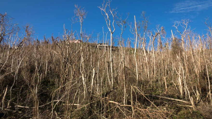 Trees and vegetation near Cupey were knocked down by the winds of Hurricane Maria in Caguas, Puerto Rico.