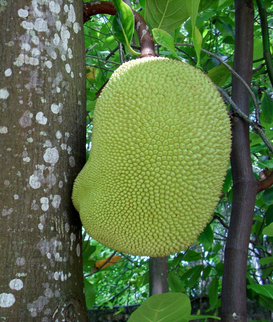 The jackfruit gives foods at the Herbivorous Butcher a fibrous, meat-like texture, Kale Walch says.