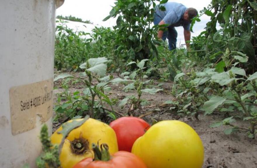 sig_091813_ruralobamacare_tomatoes.jpg